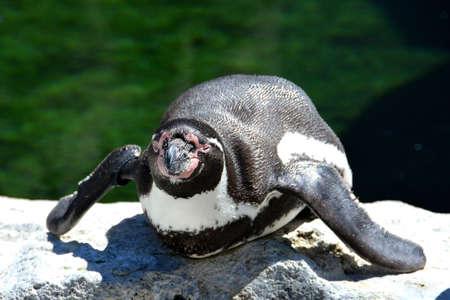 Penguin winking