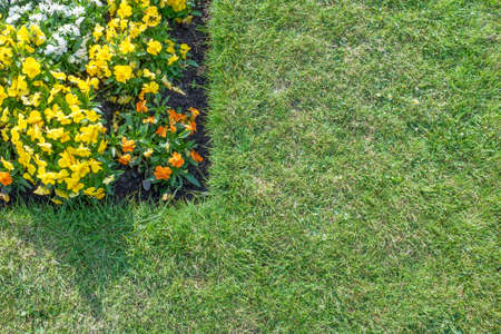Corner of flower bed with orange yellow  white flowers surrounded by green lawn