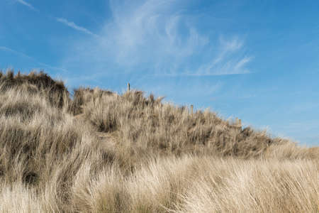 Sand dune with marram grass on sunny summer day Stock Photo