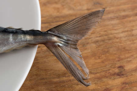 Close view of Atlantic Mackerel tail resting on white plate Stock Photo