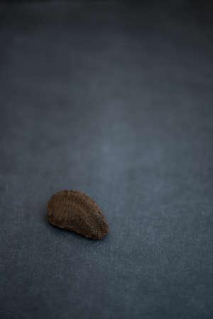 Single Brazil nut on dark background Stock Photo