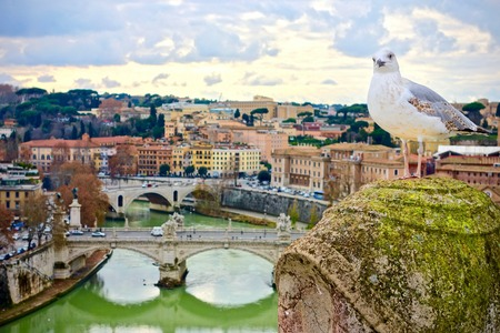 Seagull perched on an old mossy pillar looking curiously at the camera overlooking a city and river with bridges in the valley below Stock Photo