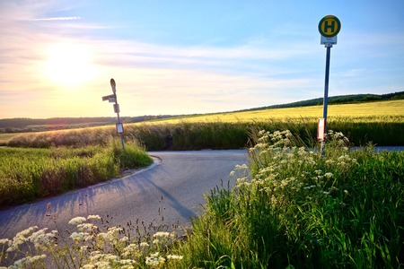 Intersection on a country road at sunset with dainty white wildflowers growing on the verge and a field of yellow corn in the background under a colorful orange sky Imagens