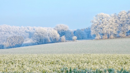 frozen field and trees on cold clear winter and blue sky Stock Photo