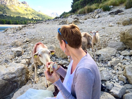 Curious sheep investigating a sandwich being eaten by a woman sitting on rocks outdoors in a mountain valley