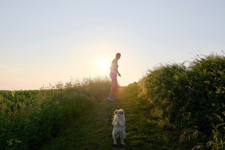 Woman Silhouette with a dog walking up a gravel path at sunset against the sun and a country fiel in a scenic landscape conceptual of a summer seasons