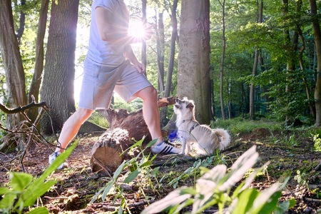 dog train by a man in woodland at sunset against the sun with beams of sunlight, sunstars through path and conceptual of a summer seasons Stok Fotoğraf