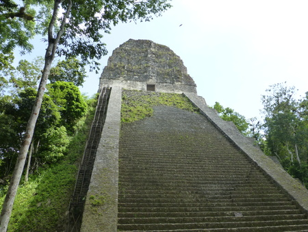 Mayan pyramid in thick jungle in Tikal.