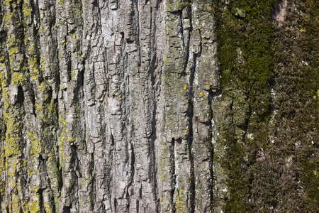 Close up of weathered tree bark with lichen and moss.