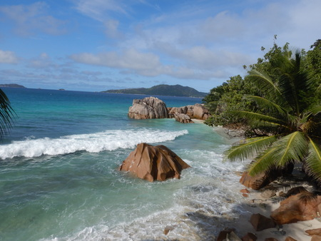tropical turquoise water beach in the seychelles with palm tree.