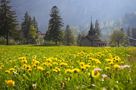 Church in field of dandelions