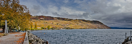 Yellow vineyards next to lake during autumn.