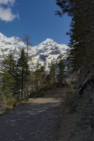 Pathway through green forest with mountain range (alps) in the background in Kandersteg.