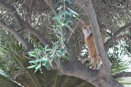 Brown white stray cat looking surprised out of tree.