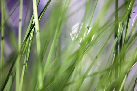 This photograph represent a beautiful fresh green grass - shallow DoF Stock Photo - 8274338