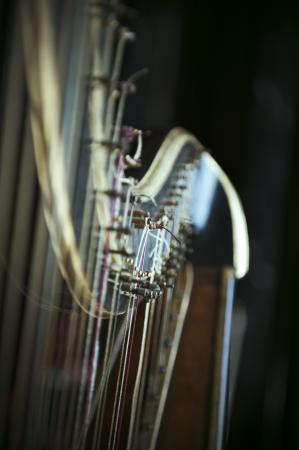the harp: Detalle de una antigua arpa del siglo pasado.