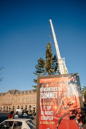 Strasbourg, France - November 5, 2013: Installation of a giant Christmas tree by cranes on the Place Kleber in Strasbourgs centre on November 5, 2013, as part of the citys Christmas decorations. The tree is boasted as one of the highest Christmas tree i