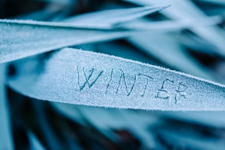 El Invierno De La Palabra Escrito En Una Hoja De Hierba Congelada En ...