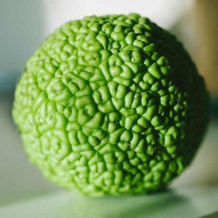 hedgeapple: Osage Orange  Maclura pomifera , also known as hedge apple shot with a tilt-shift lens