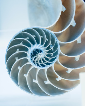 Cut away of Nautilus shell on a light blue background photo
