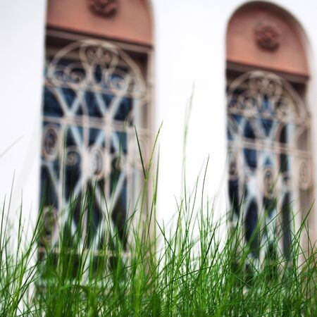 blades: Fresh blades of grass with large building windows on background