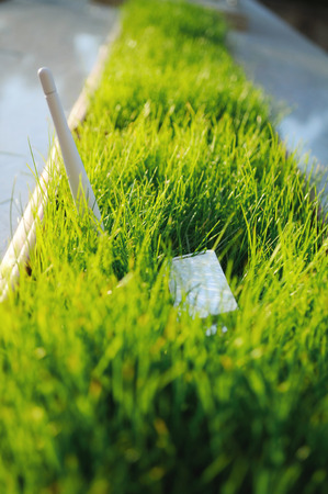 dongle: USB Wi Fi Adapter in green grass - concept for green an environmentally friendly spectre of wireless network