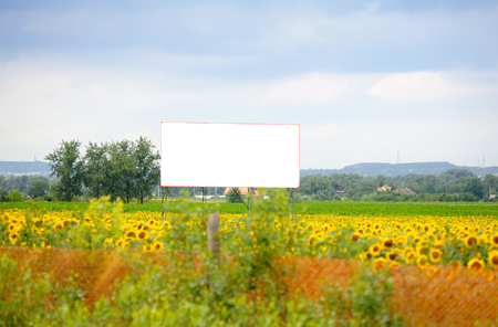 immersed: Blank advertising ad banner immersed in sunflower field