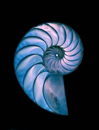 Amazing spiral fossilized Nautilus shell on black magic backround