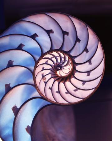 fibonacci number: Cut away of Nautilus shell on a dark magic  background