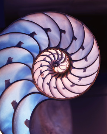 Cut away of Nautilus shell on a dark magic  background