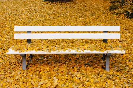 autumn in the park: Ginkgo biloba or Maidenhair tree all over the bench in autumn park with yellow autumn leaves in abundance