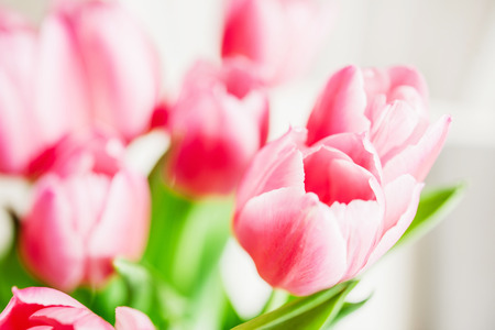 suave: Tulips best flower of the spring in vase - suave focus to put the accent on the petals Stock Photo