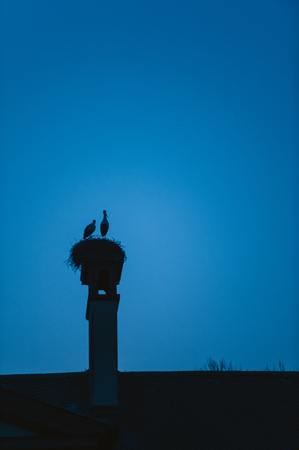 splayed: Silhouette of a stork family in their nest at dusk against beautiful blue sky background Stock Photo