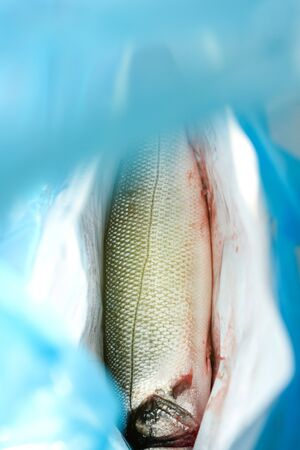 gutted: Fresh Gutted seabas fish in shop market bag ready to be washed and prepared for delicious dinner Stock Photo