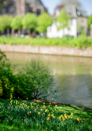 Yellow daffodils in garden near a beautiful river with traditional French buildings in the background Stock Photo