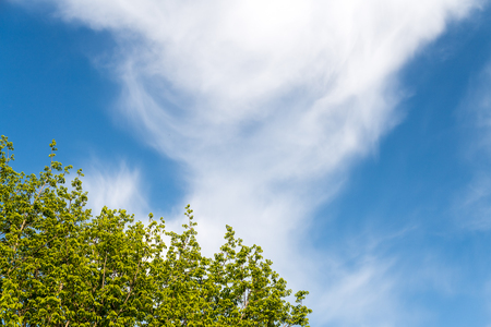 Low angle view of cloud in the sky and part of a tree with lush foliage Stock Photo