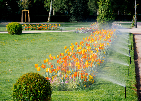 Modern automatic sprinkler irrigation system working early in the morning in green park - watering lawn and colourful flowers tulips narcissus and other types of spring flowers Archivio Fotografico