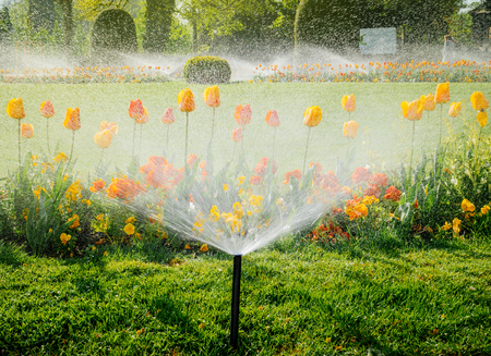 View from below of smart garden activated with full automatic sprinkler irrigation system working early in the morning in green park - watering lawn and colourful flowers tulips narcissus and other types of spring flowers