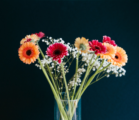 Beautiful bouquet of Gerbera flowers in glass vase against gray background. Gerbera jamesonii is a species of flowering plant in the genus Gerbera. It is indigenous to South Eastern Africa and commonly known as the Barberton daisy, the Transvaal daisy, an