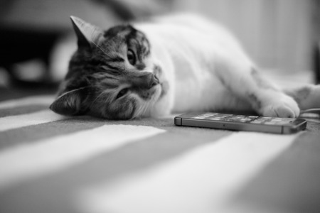 Beautiful pet cat lying on the carpet next to mobile phone  - home sweet home for this feline is all around the house, black and white image  Stock Photo