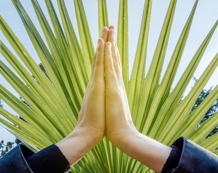 Raised hands pose (anjali mudra), palms pressing together at crown chakra on a fan palm tree background: concept of namaste