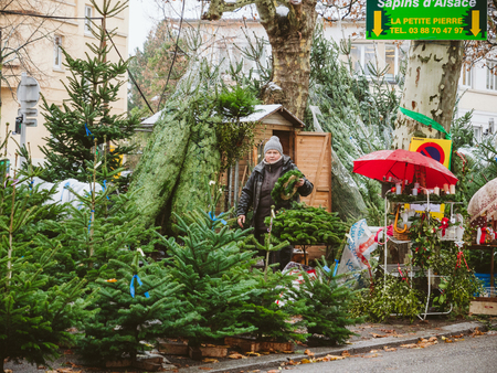 STRASBOURG, FRANCE - DEC 4, 2017: Christmas tree sale at the farmer market in central Strasbourg with evergreen fir trees from Alsace - senior woman seller preparing crowns and trees for clients