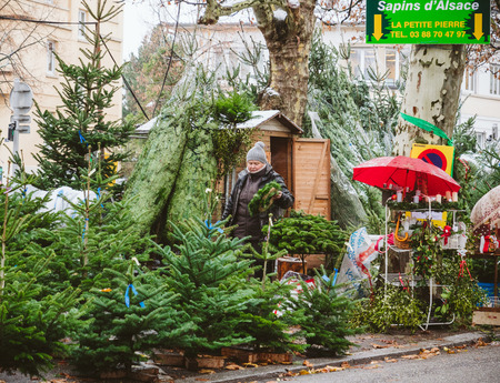 STRASBOURG, FRANCE - DEC 4, 2017: Christmas tree sale at the farmer market in central Strasbourg with evergreen fir trees from Alsace with senior woman preparing crown and trees for customers - Sapins dAlsace Editorial