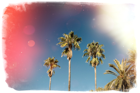 Palms against vibrant blue sky on Spain Barcelona - Music Album cover, presentation or any other use cover - vintage film border brushed effect