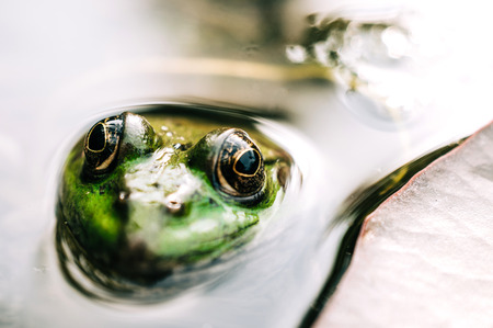 frog with detailed close-up of the eye in rainforest - animal protection and environmental conservation