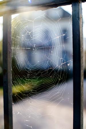 Spider net in the morning with lens flare in the left upper corner Imagens