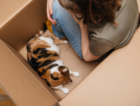 Woman staying inside a big computer cardboard box right after unboxing with her beautiful cat pet - playing having fun