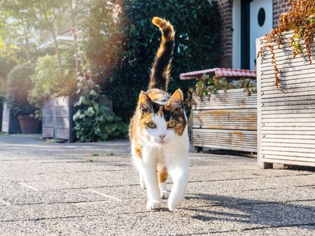 Low angle view - perspective of the front walking cat on a Dutch street
