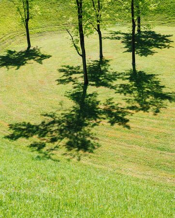 young trees and their shadows on the fresh cut grass lawn in France