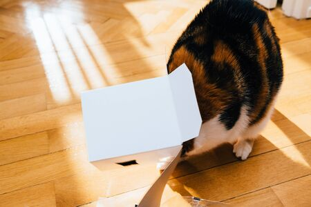 Funny cute cat playing with an open box on the wooden parquet floor
